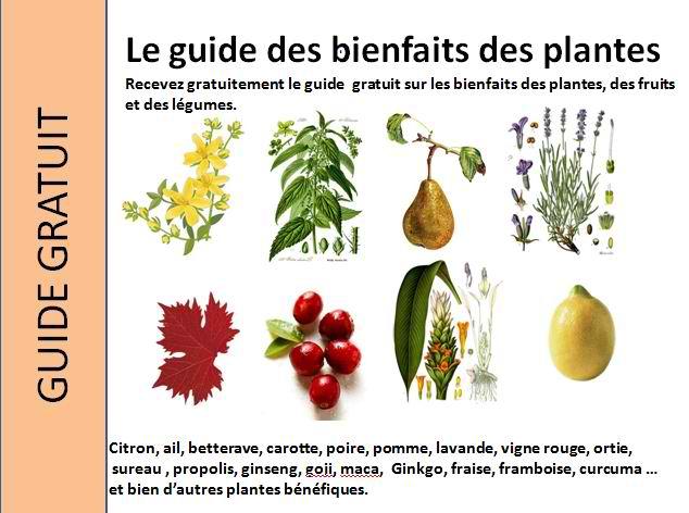 Les bienfaits des plantes - Les bienfaits du stepper ...